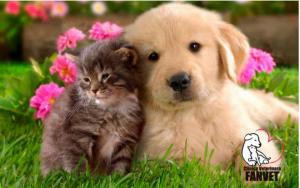 Iti doresti un animal de companie? Afla cum poti face alegerea potrivita si cum sa ai grija de acesta