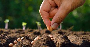 Plantarea semintelor si pasi de urmat pentru o recolta rodnica